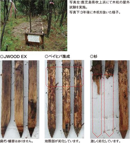 腐朽・蟻害に強い木材
